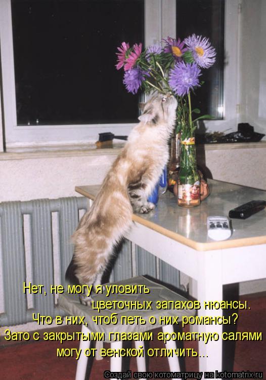 Котоматрица: цветочных запахов нюансы. Нет, не могу я уловить Что в них, чтоб петь о них романсы? Зато с закрытыми глазами ароматную салями могу от венско