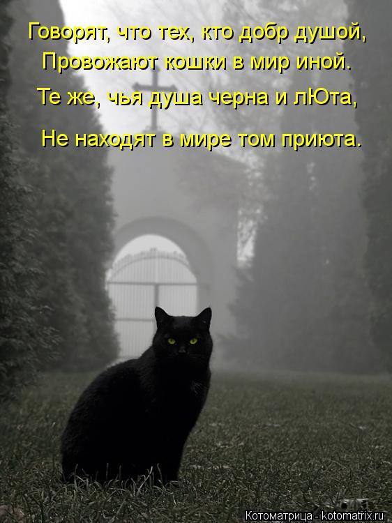 Котоматрица: Говорят, что тех, кто добр душой, Провожают кошки в мир иной. Те же, чья душа черна и лЮта, Не находят в мире том приюта.