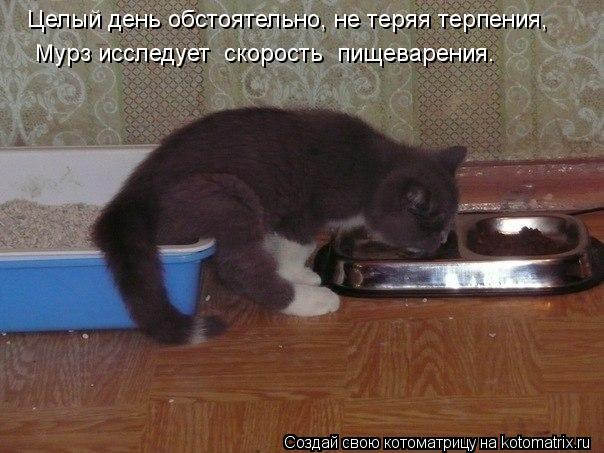 Котоматрица: Целый день обстоятельно, не теряя терпения,  Мурз исследует  скорость  пищеварения.