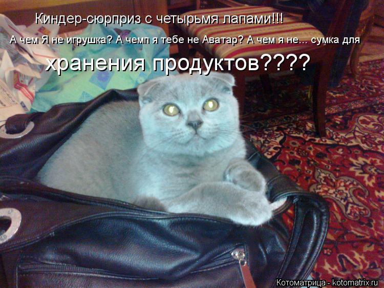 Котоматрица: Киндер-сюрприз с четырьмя лапами!!! А чем Я не игрушка? А чемп я тебе не Аватар? А чем я не... сумка для хранения продуктов????