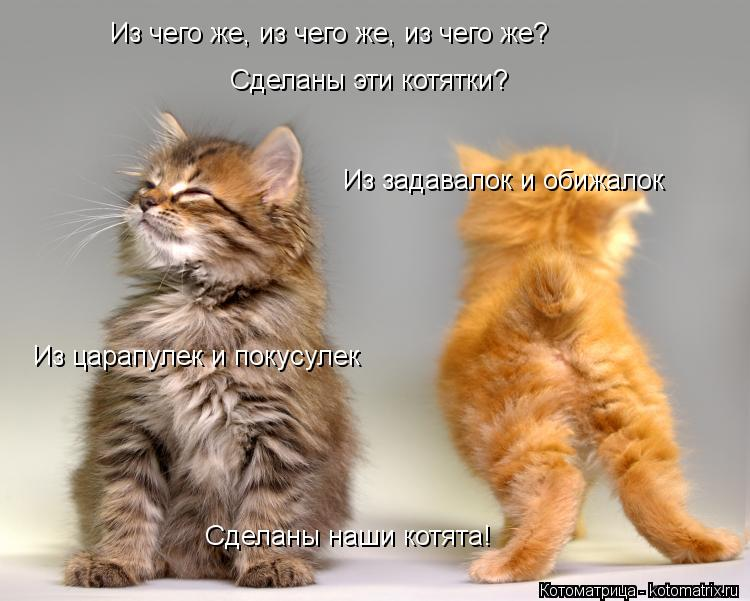 Котоматрица: Из задавалок и обижалок Из чего же, из чего же, из чего же? Сделаны эти котятки? Из царапулек и покусулек Сделаны наши котята!