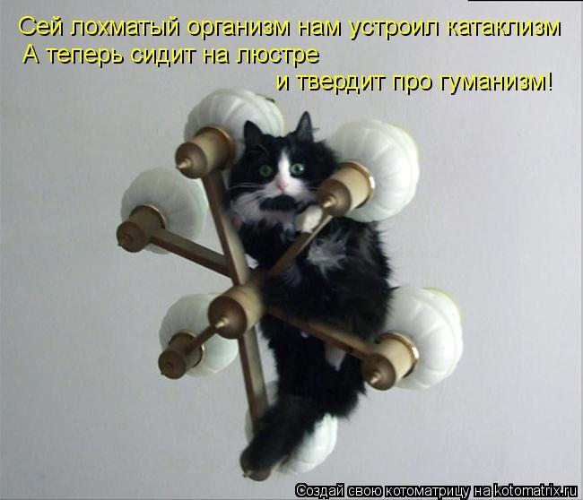 Котоматрица: Сей лохматый организм нам устроил катаклизм А теперь сидит на люстре  и твердит про гуманизм!