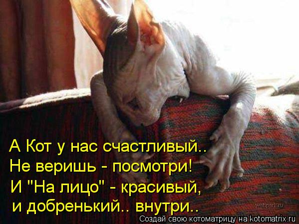 """Котоматрица: А Кот у нас счастливый.. Не веришь - посмотри! И """"На лицо"""" - красивый,  и добренький.. внутри.."""