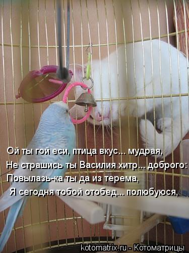 Котоматрица: Я сегодня тобой отобед... полюбуюся, Не страшись ты Василия хитр... доброго: Ой ты гой еси, птица вкус... мудрая, Повылазь-ка ты да из терема,