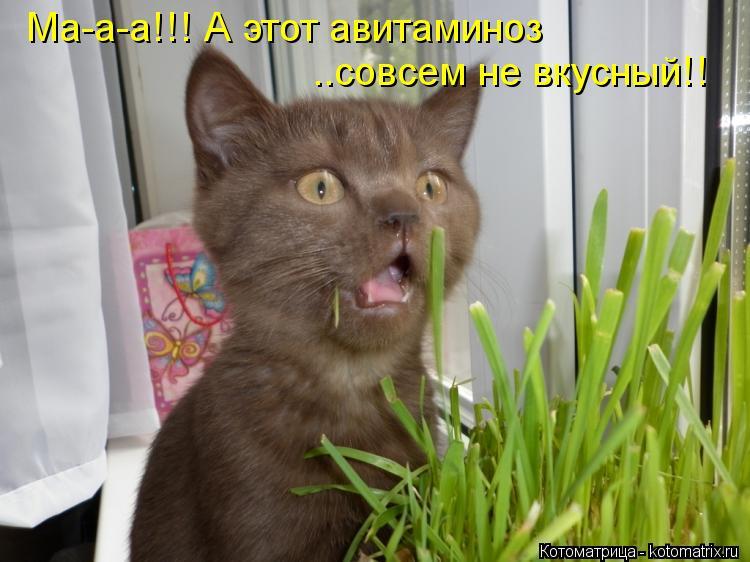 Котоматрица: Ма-а-а!!! А этот авитаминоз  ..совсем не вкусный!!