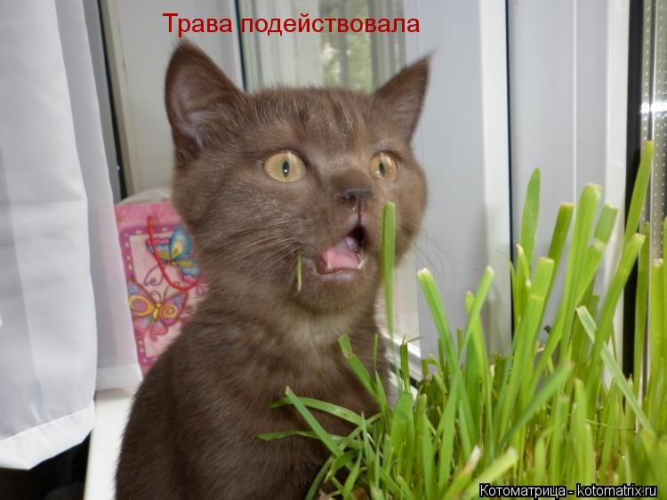 Котоматрица: Трава подействовала