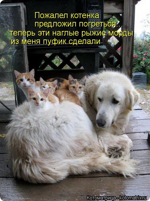 Котоматрица: Пожалел котенка предложил погреться... теперь эти наглые рыжие морды  из меня пуфик сделали