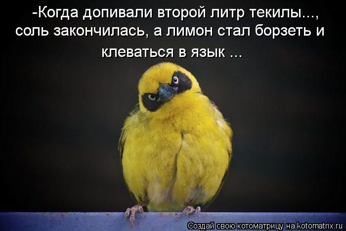 Котоматрица: соль закончилась, а лимон стал борзеть и   клеваться в язык ... -Когда допивали второй литр текилы...,
