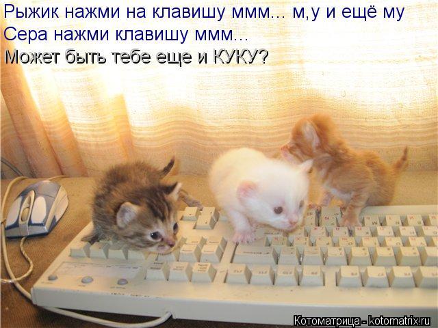 Котоматрица: Рыжик нажми на клавишу ммм... м,у и ещё му Сера нажми клавишу ммм... Может быть тебе еще и КУКУ?