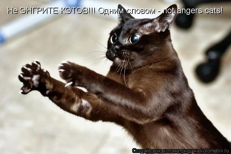 Котоматрица: Не ЭНГРИТЕ КЭТОВ!!! Одним словом - not angers cats!