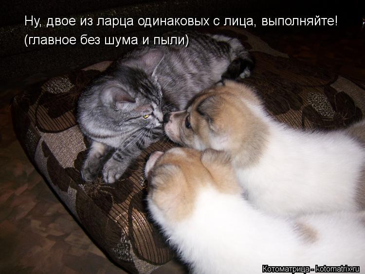 Котоматрица: Ну, двое из ларца одинаковых с лица, выполняйте! (главное без шума и пыли)