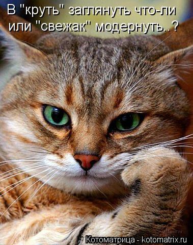 """Котоматрица: В """"круть"""" заглянуть что-ли или """"свежак"""" модернуть..?"""