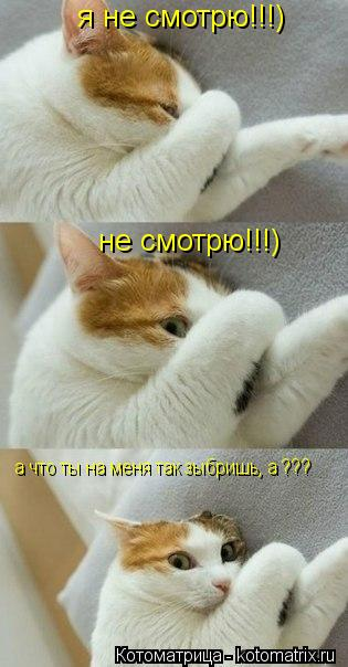 Котоматрица: я не смотрю!!!) не смотрю!!!) а что ты на меня так зыбришь, а ???