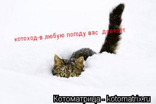 Котоматрица: котоход-в любую погоду вас  довезёт