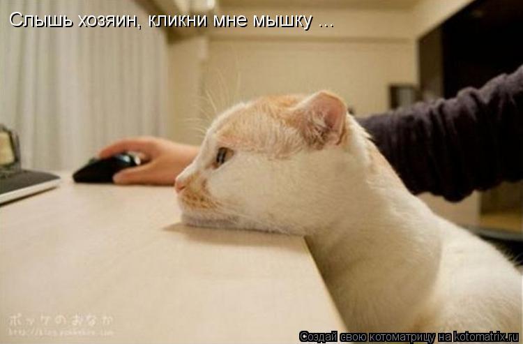 Котоматрица: Слышь хозяин, кликни мне мышку ...