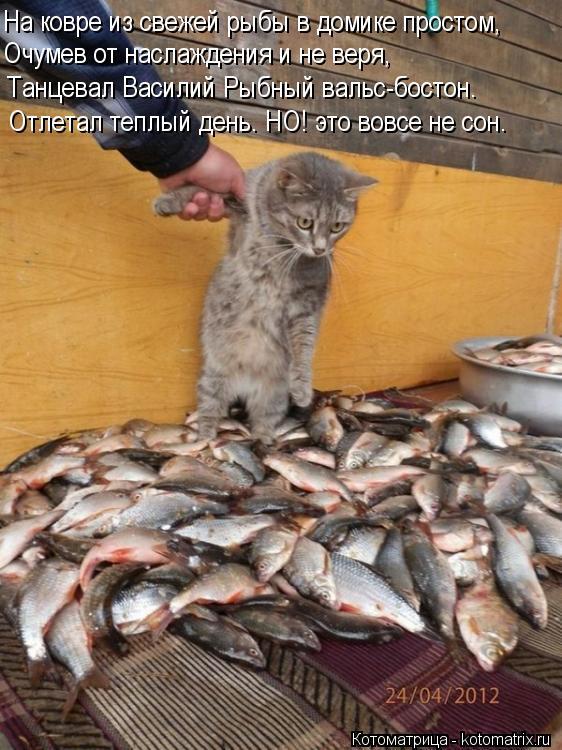 Котоматрица: На ковре из свежей рыбы в домике простом, Очумев от наслаждения и не веря,  Танцевал Василий Рыбный вальс-бостон. Отлетал теплый день. НО! это