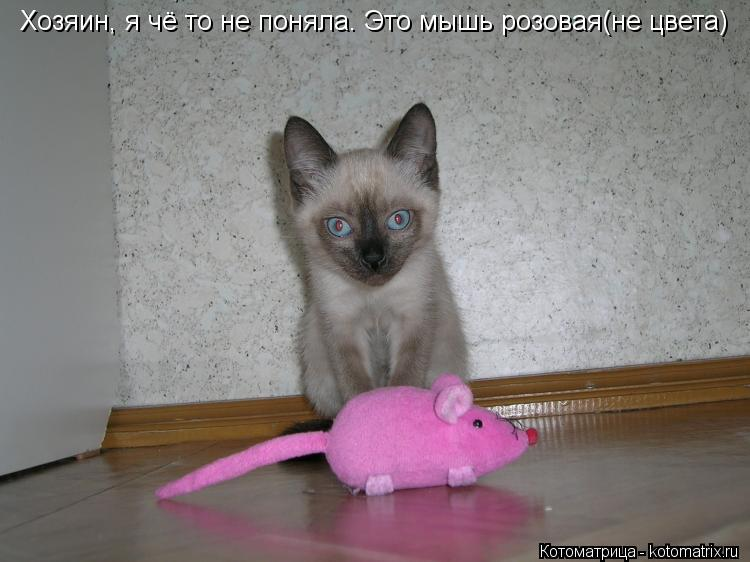 Котоматрица: Хозяин, я чё то не поняла. Это мышь Хозяин, я чё то не поняла. Это мышь розовая(не цвета)