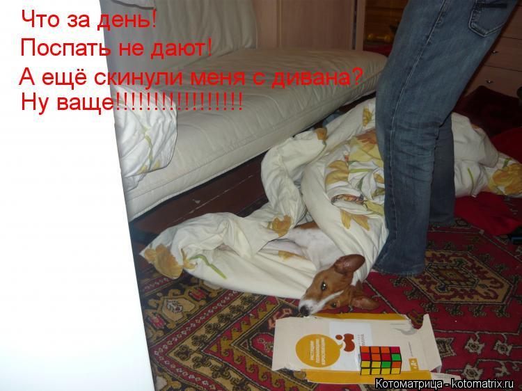 Котоматрица: Что за день! Поспать не дают! А ещё скинули меня с дивана? Ну ваще!!!!!!!!!!!!!!!!!