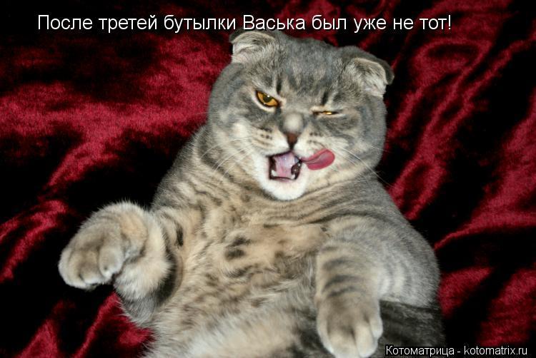 Котоматрица: После третей бутылки Васька был уже не тот!