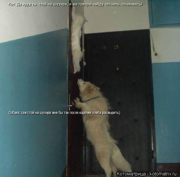 Котоматрица: Кот: Да куда ты, стой на шухире, я же говорю найду что-нить, почикаюсь! Собака: сам стой на шухире мне бы так после корочки хлеба росжыреть)