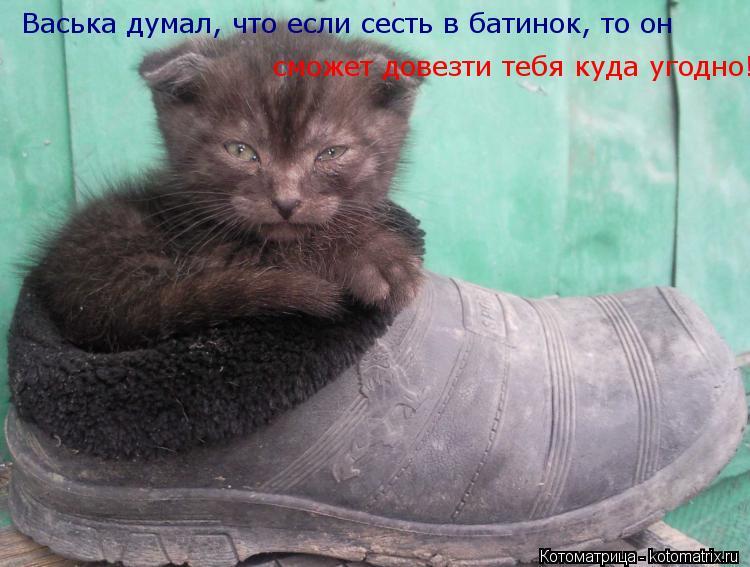 Котоматрица: Васька думал, что если сесть в батинок, то он  сможет довезти тебя куда угодно!