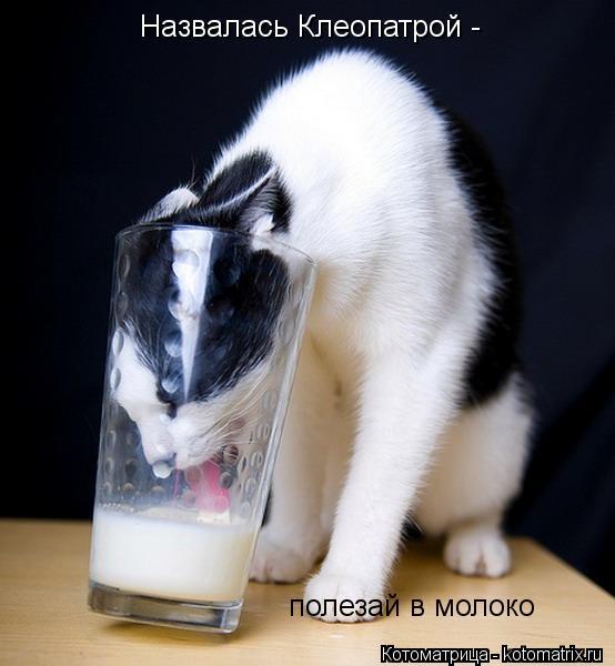 Котоматрица: Назвалась Клеопатрой -  полезай в молоко