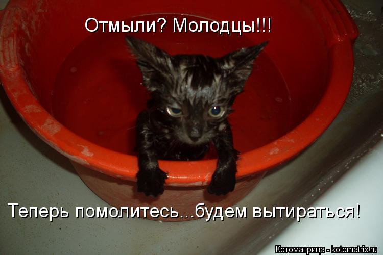 Котоматрица: Отмыли? Молодцы!!! Теперь помолитесь...будем вытираться!