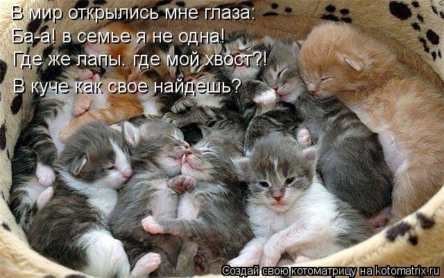 Котоматрица: В мир открылись мне глаза: Ба-а! в семье я не одна! Где же лапы. где мой хвост?! В куче как свое найдешь?