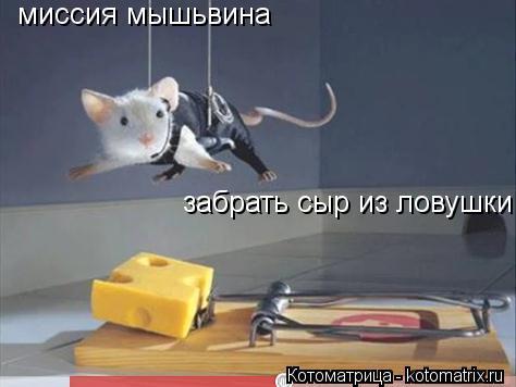 Котоматрица: миссия мышьвина забрать сыр из ловушки