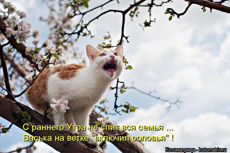 """Котоматрица: С раннего Утра не спит вся семья ... Васька на ветке """"включил соловья"""" !"""