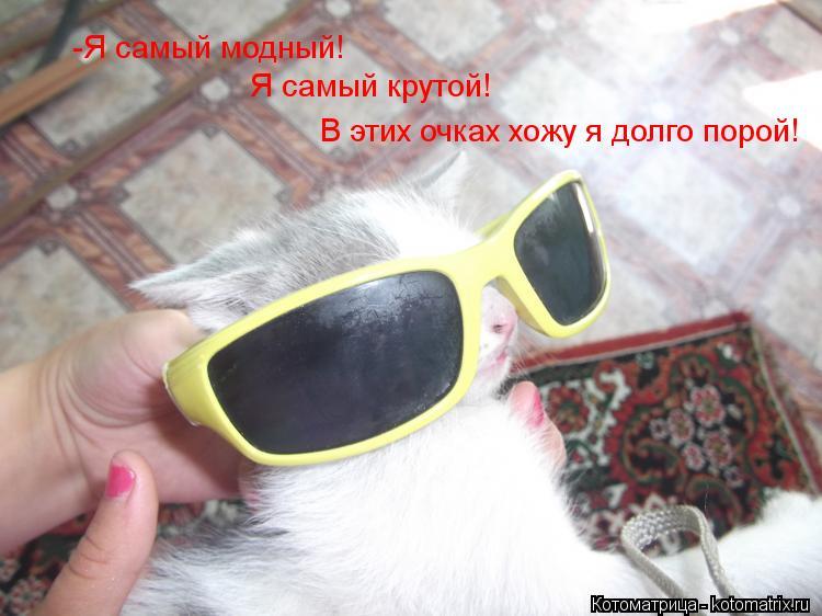 Котоматрица: -Я самый модный! Я самый крутой! В этих очках хожу я долго порой!