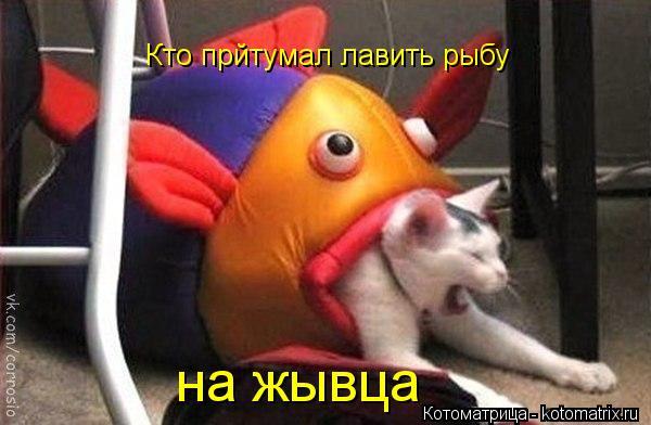 Котоматрица: Кто прйтумал лавить рыбу  на жывца