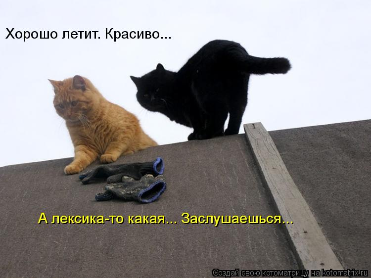 http://kotomatrix.ru/images/lolz/2012/05/29/7b02cf5a06.jpg