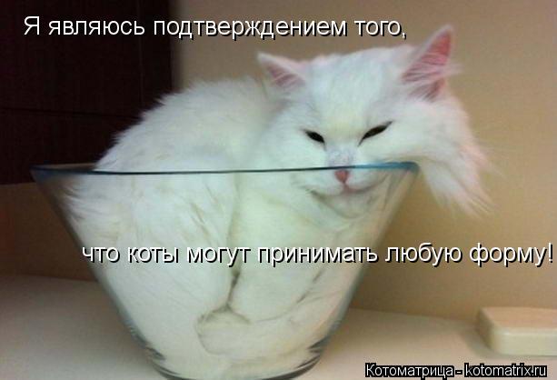 Котоматрица: Я являюсь подтверждением того,  что коты могут принимать любую форму!