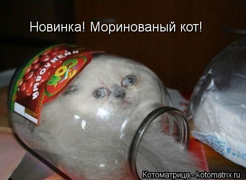 Котоматрица: Новинка! Моринованый кот!