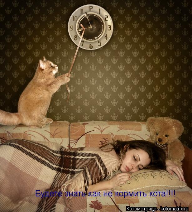 Котоматрица: Будете знать как не кормить кота!!!!