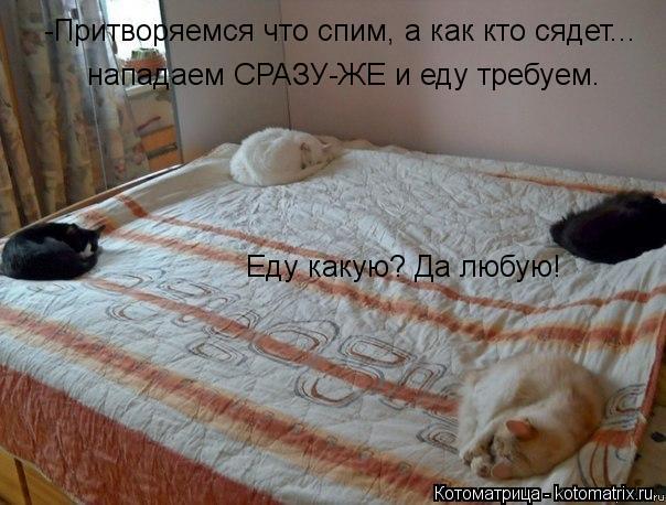 Котоматрица: -Притворяемся что спим, а как кто сядет... нападаем СРАЗУ-ЖЕ и еду требуем.  Еду какую? Да любую!