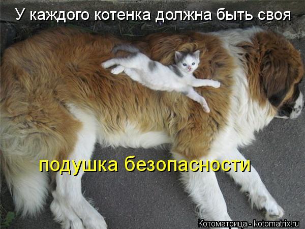 Котоматрица: У каждого котенка должна быть своя  подушка безопасности