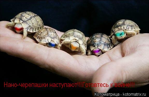 Котоматрица: Нано-черепашки наступают!!! Готовтесь к войне!!!