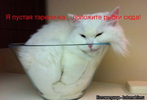 Котоматрица: Я пустая тарелочка... положите рыбки сюда!