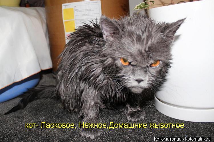 Котоматрица: кот- Ласковое, Нежное,Домашние жывотное