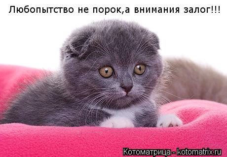 Котоматрица: Любопытство не порок,а внимания залог!!!