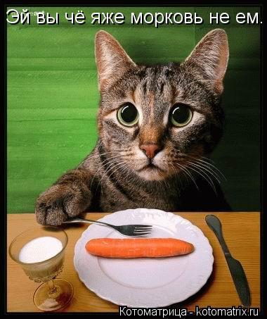 Котоматрица: Эй вы чё яже морковь не ем.
