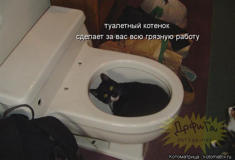 Котоматрица: туалетный котенок сделает за вас всю грязную работу