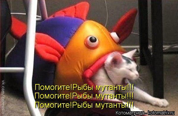 Котоматрица: Помогите!Рыбы мутанты!!! Помогите!Рыбы мутанты!!! Помогите!Рыбы мутанты!!!