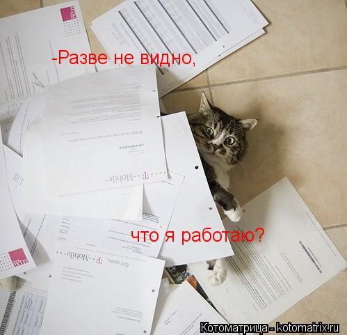 Котоматрица: -Разве не видно,  что я работаю?