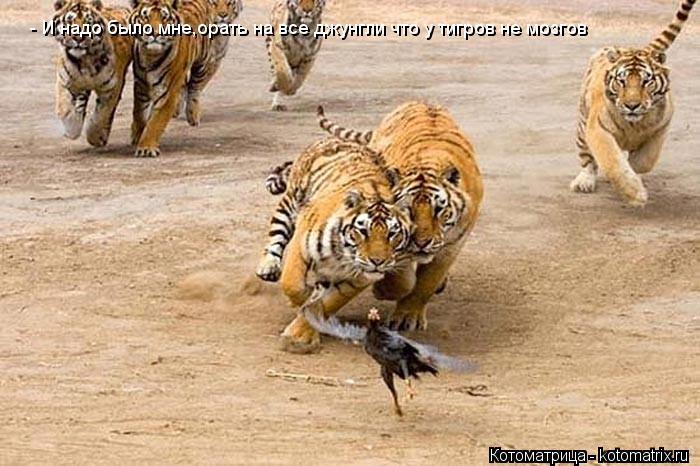 Котоматрица: - И надо было мне,орать на все джунгли что у тигров не мозгов