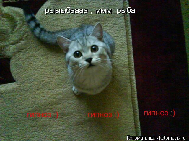 Котоматрица: рыыыбаааа , ммм  рыба  гипноз :) гипноз :) гипноз :)