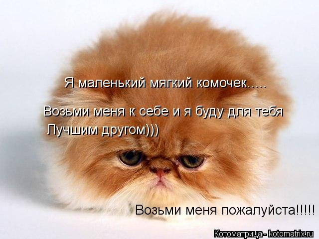 Котоматрица: Я маленький мягкий комочек.....  Возьми меня к себе и я буду для тебя  Лучшим другом))) Возьми меня пожалуйста!!!!!
