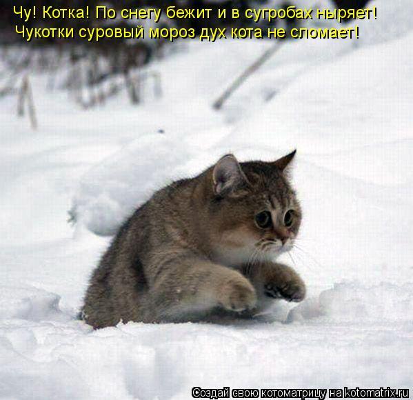 Котоматрица: Чу! Котка! По снегу бежит и в сугробах ныряет! Чукотки суровый мороз дух кота не сломает!